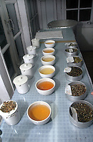 INDIA (West Bengal - Darjeeling) June 2007,Makaibari tea testing room. Here the 1st bowl contains the first flush of the year the 2nd one by the 2nd flush and the last one the Silver tips of Makaibari the most expensive tea in the world. Makaibari produces the most expensive tea in the world. They produce the tea organically (without using any fertilizers or spraying pesticides)through permaculture.  Makaibari is situated at the misty foot hills of Darjeeling Himalayas - Arindam Mukherjee