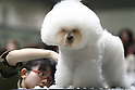 Apr. 3, 2010 - Tokyo, Japan - A dog gets a trim during the Japan International Dog Show 2010 at Tokyo Big Sight on April 3, 2010 in Tokyo, Japan.