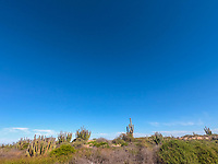 Sonoran desert landscape. landscape of thorny thicket and clear sky, blue sky.<br /> <br /> pasiaje del desierto de Sonora . piasaje de matorral espinoso y  cielo despejado, cielo azul.<br /> (Photo: Luis Gutierrez / NortePhoto.com)