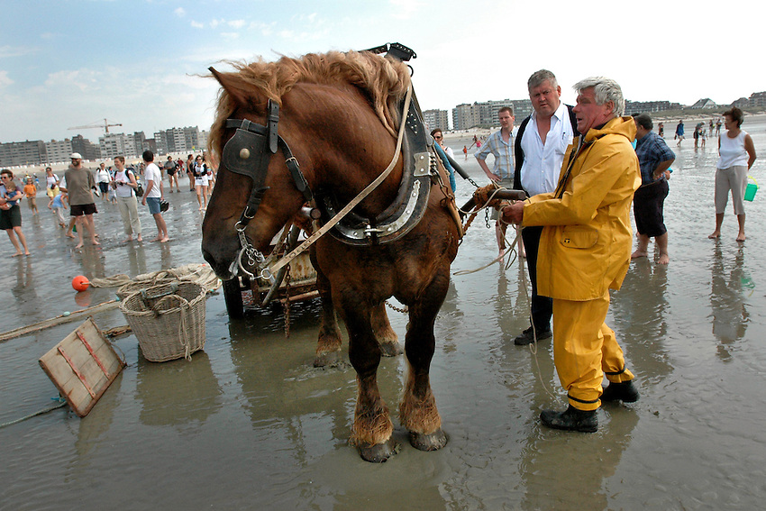 North Sea shrimp harvest, Oostduinkerke, Belgium, July 2005. (photo by Pico van Houtryve)