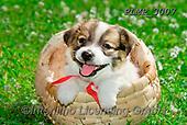 Marek, ANIMALS, REALISTISCHE TIERE, ANIMALES REALISTICOS, dogs, photos+++++,PLMP3007,#a#, EVERYDAY