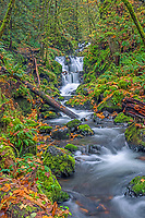 ORCG_D206 - USA, Oregon, Columbia River Gorge National Scenic Area, Emerald Falls on Gorton Creek in autumn with fallen leaves and and moss covered rocks and trees.