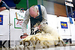 Dan Kelleher (Kilgarvan) in action at the All Ireland Sheep Shearing Championships in Millstreet last weekend.