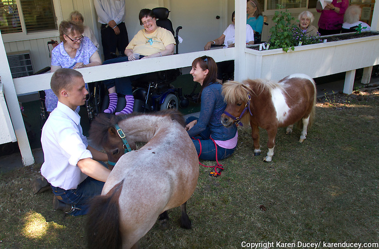 Miniature horses visit with residents at the Park Ridge Skilled Nursing Center in Shoreline, Washington on July 10, 2014. Veterinarian Dana Bridges Westerman (right) with dwarf miniature horse Tiny Bubbles, arranges the therapy visit every year.  James Driscoll, left, handles Milo, a dwarf miniature horse.