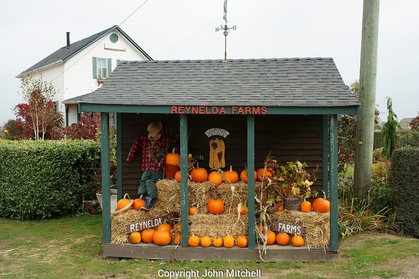 Roadside pumpkin stand in Ladner, British Columbia, Canada