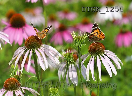 Gisela, FLOWERS, photos(DTGK1250,#F#) Blumen, flores, retrato