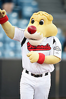 Nashville Sounds mascot Ozzie entertains fans before a game against the Omaha Storm Chasers on May 19, 2014 at Herschel Greer Stadium in Nashville, Tennessee.  Nashville defeated Omaha 5-4.  (Mike Janes/Four Seam Images)