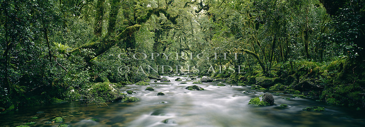 Wild Natives River in Bligh Sound. Fiordland National Park New Zealand.