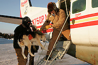 Wednesday March 7, 2007   Nikolai resident and volunteer John Runkle hands a dropped dog to Pennair Caravan pilot Bill Batman for a ride back to Anchorage at the Nikolai checkpoint on Wednesday in 35 below temperatures