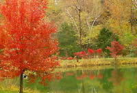 maple, sumac, and dogwood trees all red in fall surrounding a rural lake, MIssouri