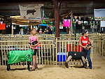 Practicing showing sheep at the opening day of the 80th Amador County Fair, Plymouth, Calif.<br /> <br /> Miss Amador Scholarship Contest<br /> Mutton Bustin' preliminary<br /> .<br /> .<br /> .<br /> .<br /> #AmadorCountyFair, #1SmallCounty Fair, #PlymouthCalifornia, #TourAmador, #VisitAmador