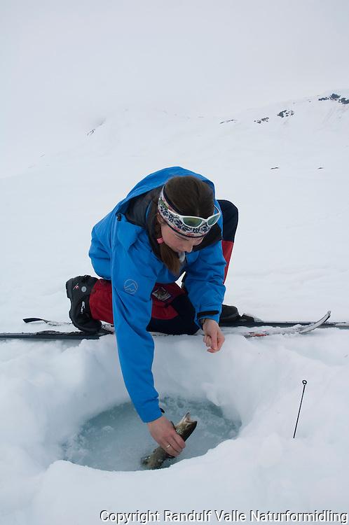 Jentelander fin ørret t under isfiske ---- Girl landing trout during ice fishing