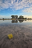 Baines' Baobabs and reflections