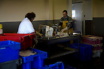 Processing fish Newhaven East Sussex England
