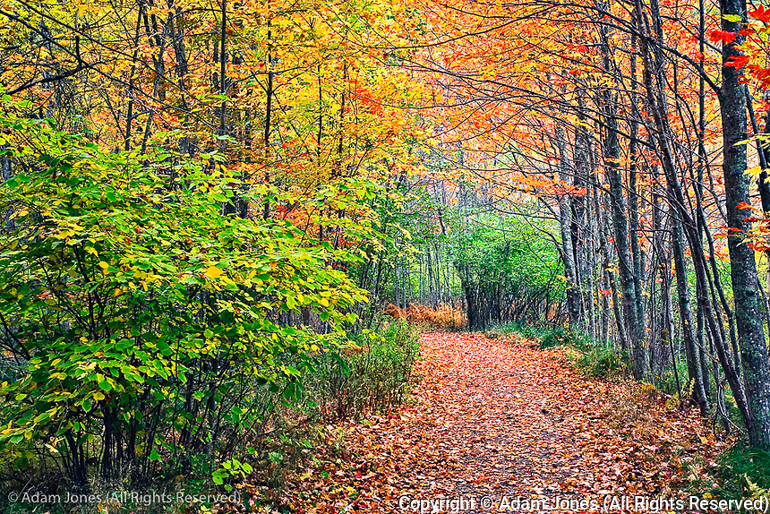 Footpath through autumn forest, Acadia National Park, Maine