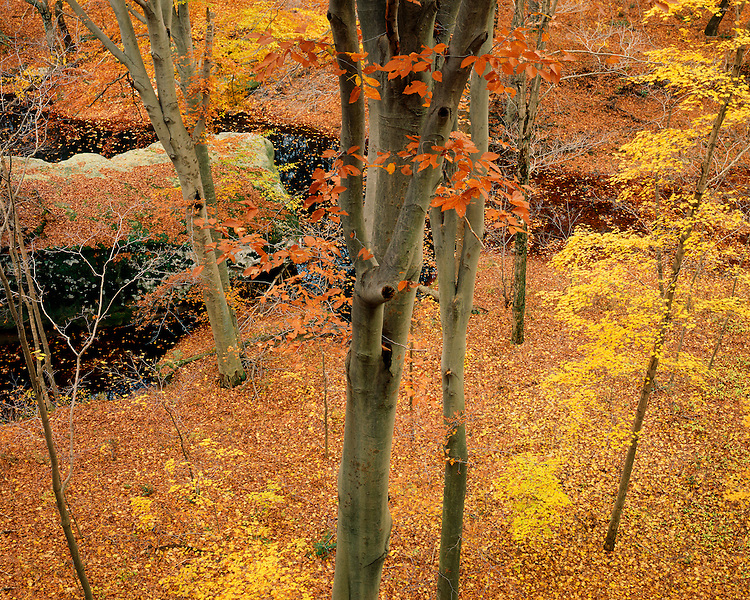 Fall color in Jay Gap in Bell Smith Springs Recreation Area; Shawnee National Forest, IL