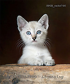 Xavier, ANIMALS, cats, photos+++++,SPCHCATS746,#a# Katzen, gatos