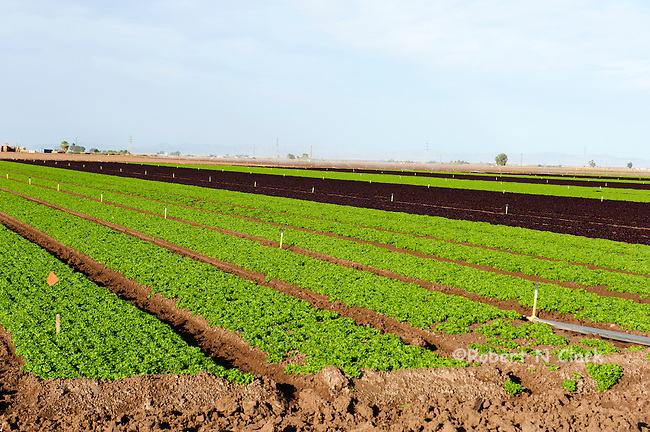 Vegetable fields in the Imperial Valley, CA