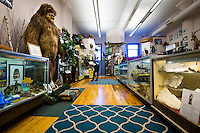 Main room at the International Cryptozoology museum in Portland Maine, USA