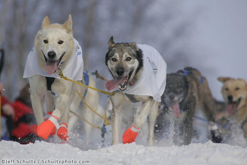Rick Larson's dogs run the trail in downtown Anchorage during the Saturday ceremonial start.