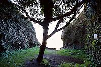 Spanien, Kanarische Inseln, El Hierro, Arbor Santo der heilige Baum der Bimbanchen bei El Garoe