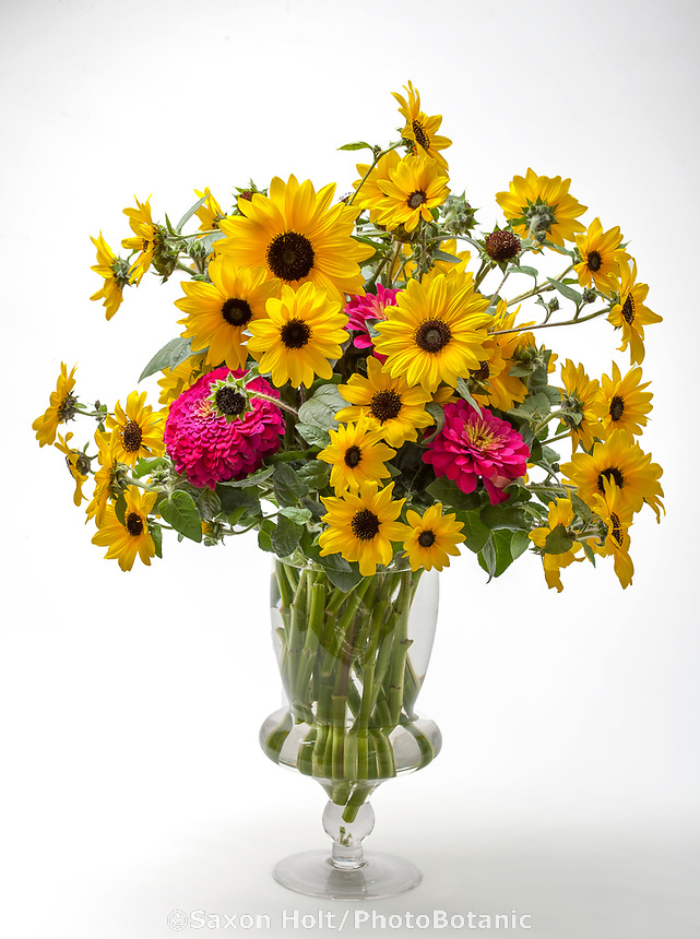 Bouquet of Sunflower - Sunfinity™ flower arrangement in glass vase on white background