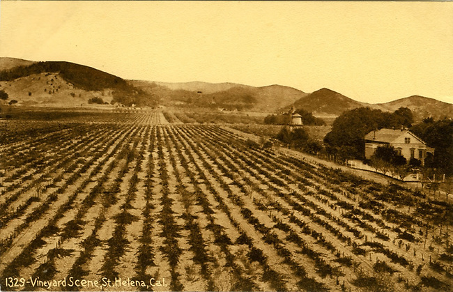 View of vineyard and house now owned by Spottswoode.  Date, approx 1900