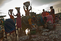 Indian women sells fish at a market in Cuddalore town harbour in the in the Southern Indian state of Tamil Nadu, India on the 29th of October 2010.