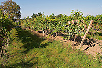 Vineyard. Domaine des Baumard, Rochefort, Anjou, Loire, France