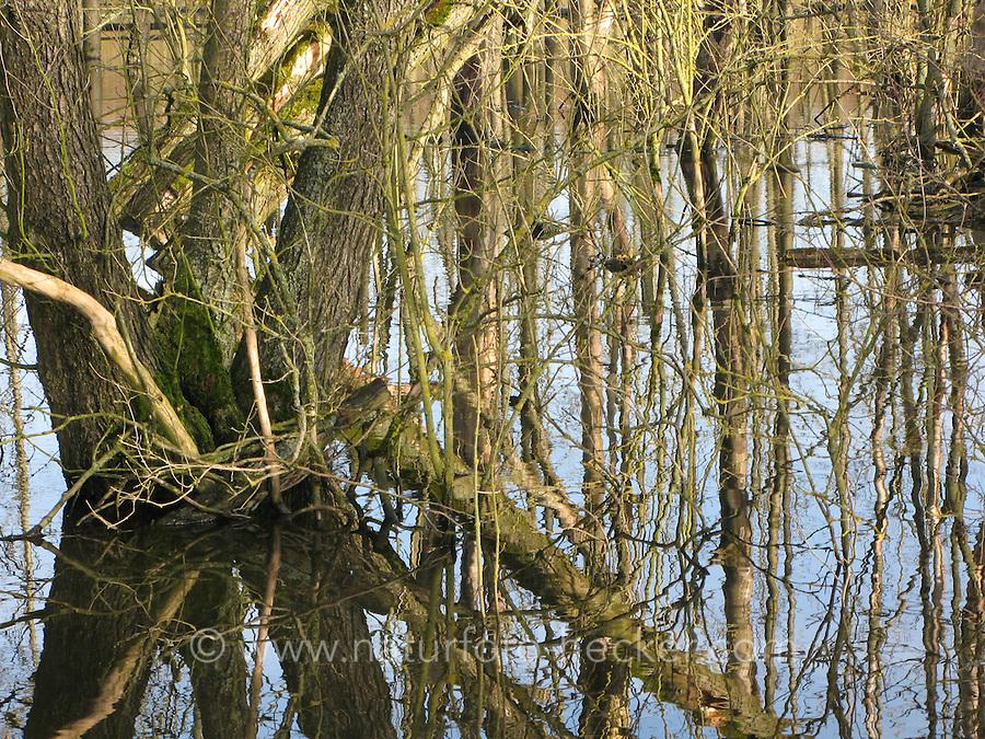 Erlenbruch, Erlen-Bruch, Feuchtgebiet, Sumpf, Tümpel, Bruchwald, Wiedervernässung, Hellmoor, Panten, Schleswig-Holstein