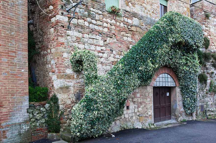 &quot;Ivy on the Wall&quot;<br />