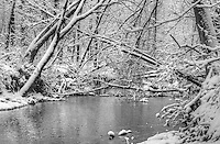 Winter at Perch Creek Nature Habitat
