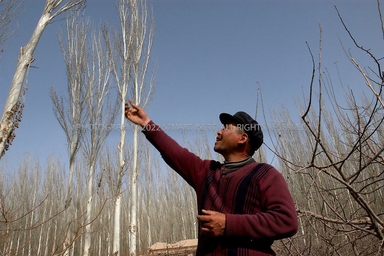 3/27/2004--Aksu, Xinjiang Province, China..Wang Huizhen (50) points to trees planted around his apple orchard. The area was once desert but has since been turned into farm land on the outskirts of Atsu, on the northern edge of China's Taklimakan Desert. The Taklimakan, the world's second largest desert, is located in northwest China, and the Chinese government is working on one of the largest tree planting projects ever to prevent the desert from expanding. The area is also home to recent Han Chinese immigrants to the region, many who have come to farm on land reclaimed from the desert...Photograph by Stuart Isett .©2004 Stuart Isett. All rights reserved