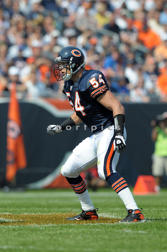 BRIAN URLACHER, of the Chicago Bears  in action against the Tampa Bay Buccaneers during the Bears game in Chicago, IL  on September 21, 2008... The Buccaneers won the game 27-21