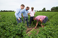 Farmers inspecting potatoes irrigated with drip - Lincolnshire, July