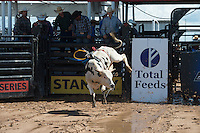 463 TNT of Tyler Terrell during the American Bucking Bull, Incorporated event in Decatur, TX - 6.3.2016. Photo by Christopher Thompson