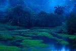Lluvias de oriente / Parque Nacional Camino de Cruces, Panamá.<br /> <br /> Edición de 10 | Víctor Santamaría.<br /> <br /> <br /> Oriental rains / Camino de Cruces National Park, Panama.<br /> <br /> Edition of 10 | Víctor Santamaría.