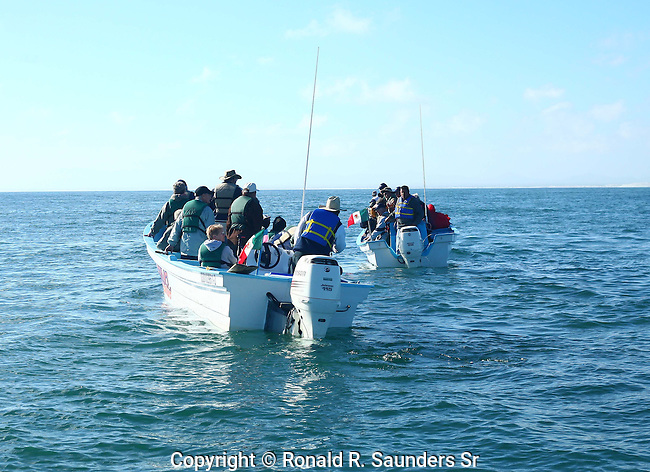 TOURISTS IN BOATS WITH GUIDES TO VIEW WHALES