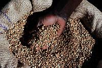 ANGOLA Calulo, Verarbeitung von Kaffee in Anlage der Kaffeeproduzenten Kooperative von Calulo / ANGOLA Calulo, coffee processing unit