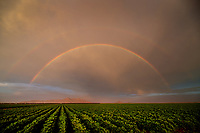 Rainbow, storm, storm chasing, storm chaser, Arizona, weather, clouds, desert, mountains, rain, monsoon, double rainbow, farm, field, crops, farming