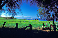 Ranch land in Kohala on the Big Island with trees framing the image and a rustic fence in the foreground