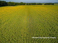 63801-11308 Sunflower field-aerial Jasper Co.  IL