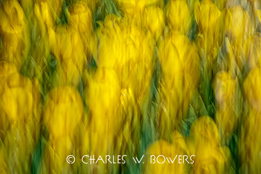 Color In Motion<br />