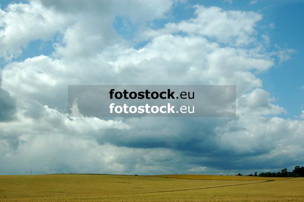 Gewitterwolken über Getreidefeld in Rheinhessen
