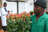TANSANIA, Anbau von fair trade Schnittblumen Rosen in Gewaechshaus fuer Export nach Europa bei Firma Kiliflora nahe Arusha, Frachtabteilung - TANZANIA Arusha, rose flower cultivation in green house at fair trade company Kiliflora for export to Europe, shipping deapartment