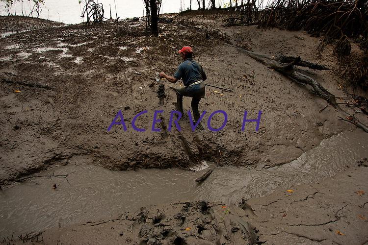 Entre ra&iacute;zes a&eacute;reas, enfiado na lama, o pescador artesanal Jos&eacute; Benedito captura caranguejos nos manguezais do litoral, na foz do rio Amazonas. Benedito com dois companheiros conseguem capturar cerca de 150 caranguejos por dia, comercializando o crust&aacute;ceo a U$11 o cesto com 100 unidades.<br /> Bragan&ccedil;a - Par&aacute; - Brasil <br /> Foto: Paulo Santos <br /> 16/02/2011
