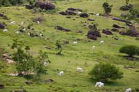 Santo Antonio do Jacinto_ MG, Brasil...Gato em um pastao em Santo Antonio do Jacinto...The cattle in the pasture in Santo Antonio do Jacinto...Foto: LEO DRUMOND / NITRO.