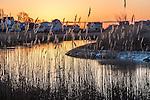 Sunrise on Belle Isle Marsh, East Boston, Massachusetts, USA