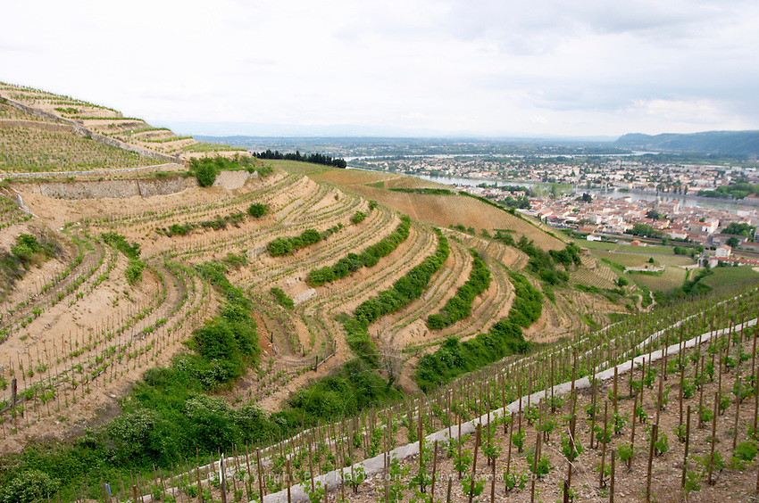 vineyard tain l hermitage rhone france