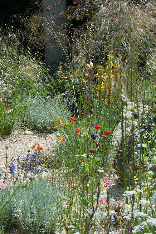 The M&G Contemporary Paradise Garden, gold medal winner at the Chelsea Flower Show, 2014. Designed by Cleve West.